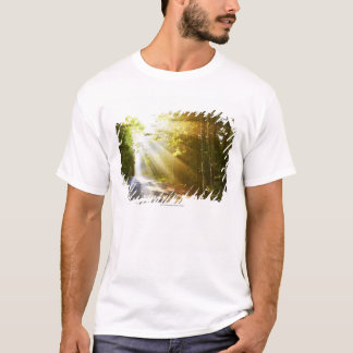 Sun Beams Through Forest in Acadia National Park T-Shirt
