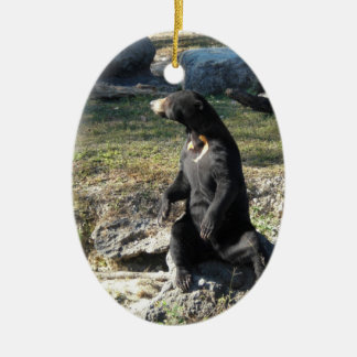 Sun Bear at the Zoo Christmas Ornament