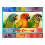 Sun blue-crowned green-cheeked conures postcard