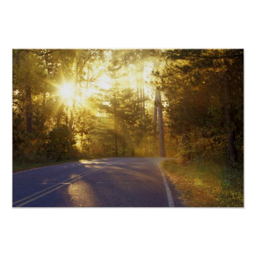 Sun bursts through the forest onto roadway at posters