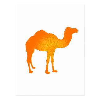Sun Camel Postcard