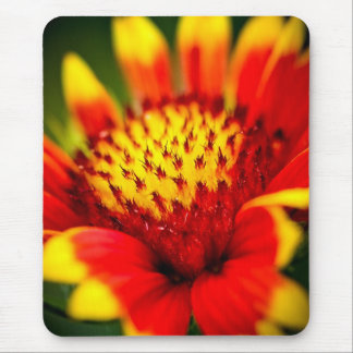 sun collector mouse pad