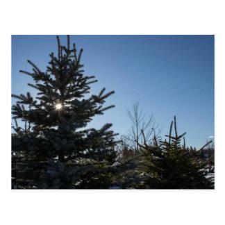 Sun coming through a fir tree - winter postcard