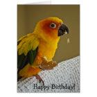 Sun Conure Bird Blank Greeting Card