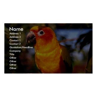 Sun conure business card templates