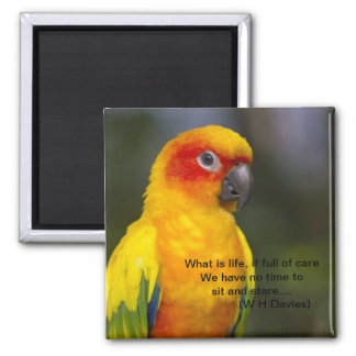 Sun Conure Parrot Magnet with text