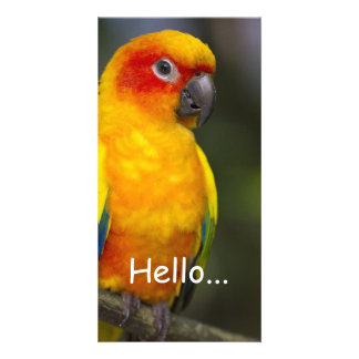 Sun Conure Parrot Photo Card