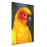 Sun Conure Parrot Wrapped Canvas