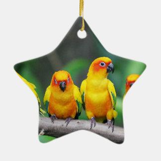 Sun Conures Christmas Ornament