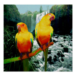 Conure Gifts T Shirts Art Posters Amp Other Gift Ideas