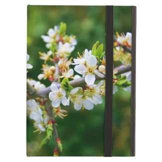 Sun-Dappled Spring Hawthorn Case For iPad Air