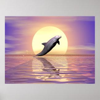 Sun Dolphin Poster