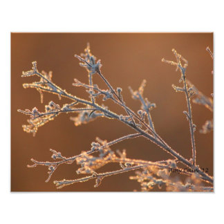 Sun drenched frost photo art