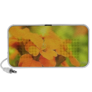 Sun Drenched Siberian Wallflower Notebook Speakers