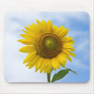 Sun Flower Against Blue Sky Mouse Pad