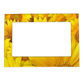 Sun flower frame magnets