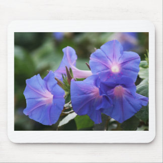 Sun Illuminated Blue and Lavender Morning Glories Mousepads