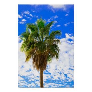 Sun-kissed palm tree paradise poster