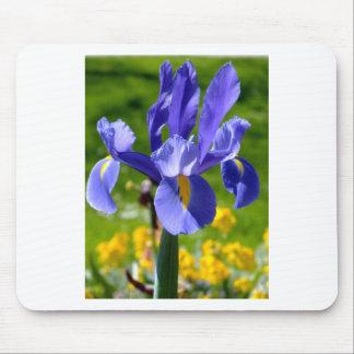 Sun light on blue iris mousepads