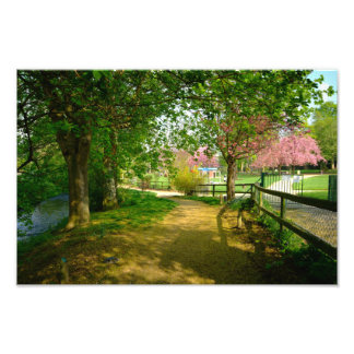 Sun light one Prunus Park Photo Print