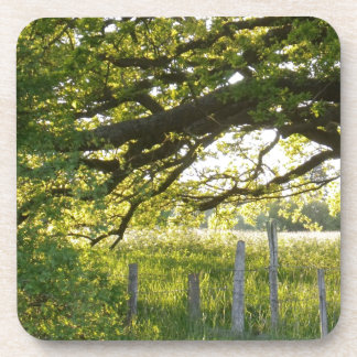 Sun Lit Field And Trees Coaster
