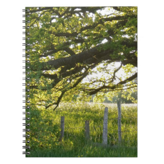 Sun Lit Field And Trees Spiral Notebook