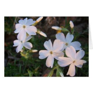 Sun lit floral card