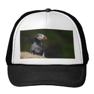 Sun on it's Back Puffin Cap