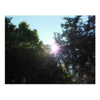 Sun Peeks Trees Postcard