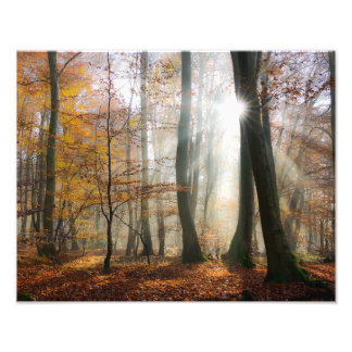Sun Rays Mystic Misty Scenic Forest - Paperprint Photo Print