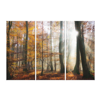 Sun Rays Mystic Scenic Fall Forest Nature Photo .. Canvas Print