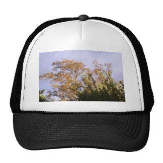 sun shining through birch trucker hats