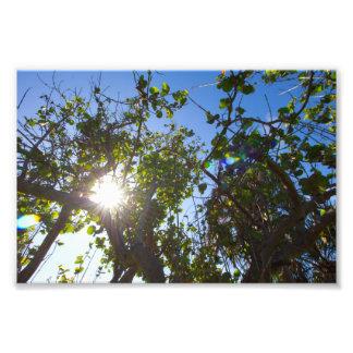 Sun shining through mangrove trees, Florida. Photo Print