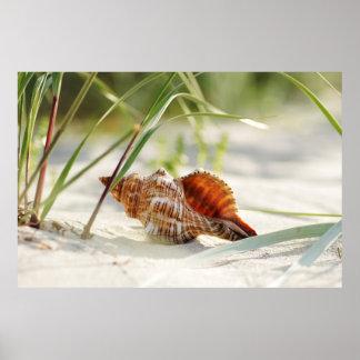 Sun, summer, beach and sea dreamy shell poster