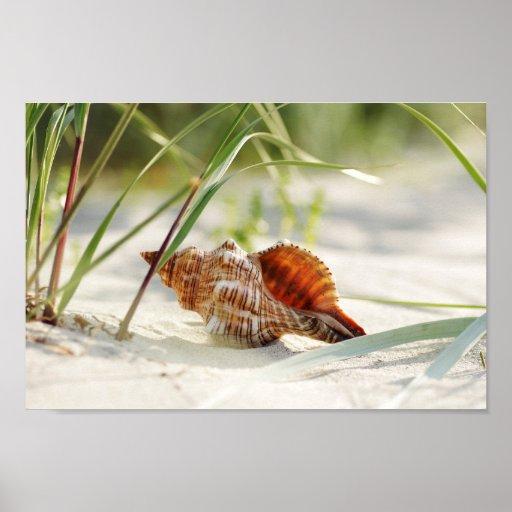 Sun, summer, beach and sea dreamy shell print