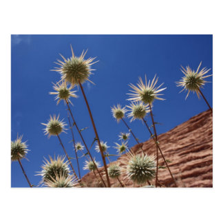 Sun Thistle Postcard