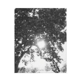 Sun through a tree black and white canvas