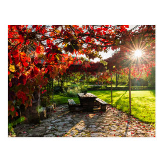 Sun through autumn leaves, Croatia Postcard
