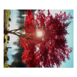 Sun through Red Japanese Maple by the Lake, Autumn Poster