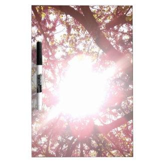 sun through the trees dry erase board