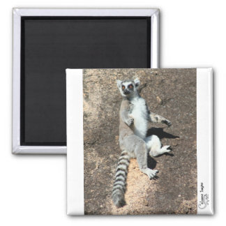 Sun worship lemur magnet