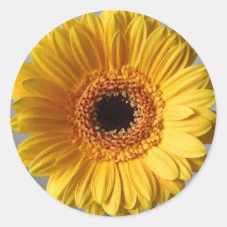 Sun Yellow Gerbera Classic Round Sticker