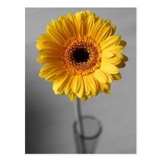 Sun Yellow Gerbera Postcard