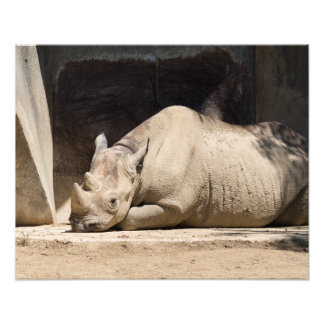 Sunbathing Rhino Photo