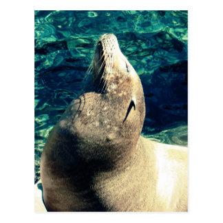 Sunbathing Sea Lion Postcard