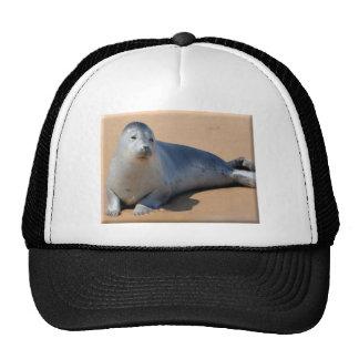 Sunbathing Seal Cap