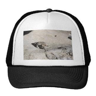 sunbathing toads cap