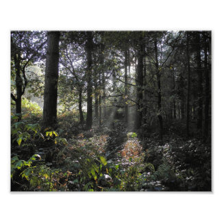 Sunbeams in forest photo print