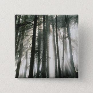 Sunbeams streaming through trees, Mount Rainier 15 Cm Square Badge