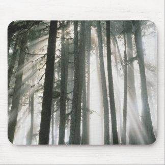 Sunbeams streaming through trees, Mount Rainier Mouse Pad